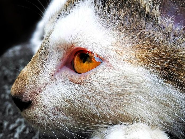 Eyeball Pets
