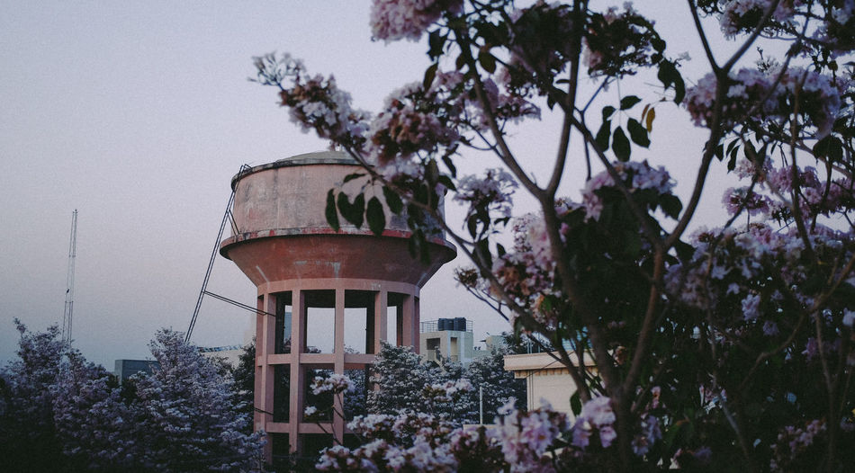 Bangalore, Japan Cherry Blossoms City Pink Tree Trees Architecture Beauty In Nature Blossoms  Branch Flower Flowers No People Outdoors Tank Tree Vintage Water Tower - Storage Tank Watertank