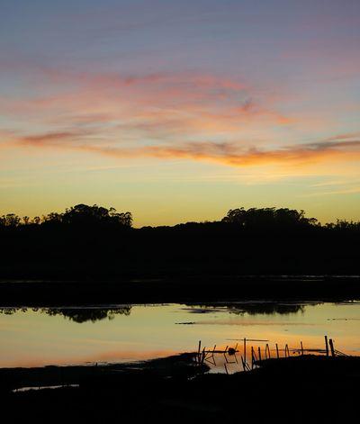 Reflection Sunset Silhouette Tree Dusk Dramatic Sky Sky Cloud - Sky Elkhorn Slough