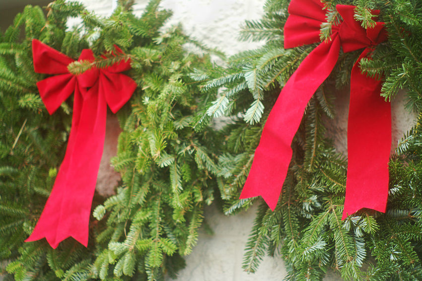 Evergreen Christmas Wreaths With Red Bows Close Up Close-up Decoration Evergreen Christmas Wreaths,Christmas Wreaths,red Bow,Christmas Wreaths With Red Bows,Christmas Decorations,Christmas,decorations,home Decorations,door Wreath,Suzanne Powers, Freshness Red Tradition