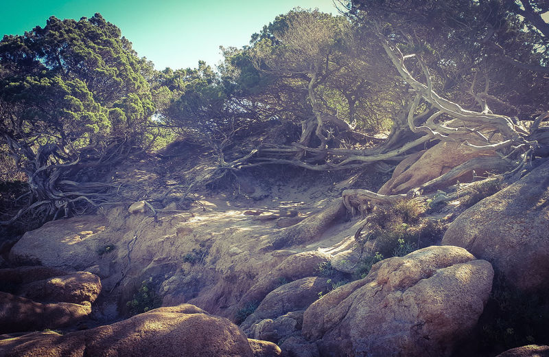 Trees Tree Roots  Tree Root Collection Tree Roots On Beach Stones N Rocks Backgrounds Full Frame Close-up Idyllic Non-urban Scene Tranquility