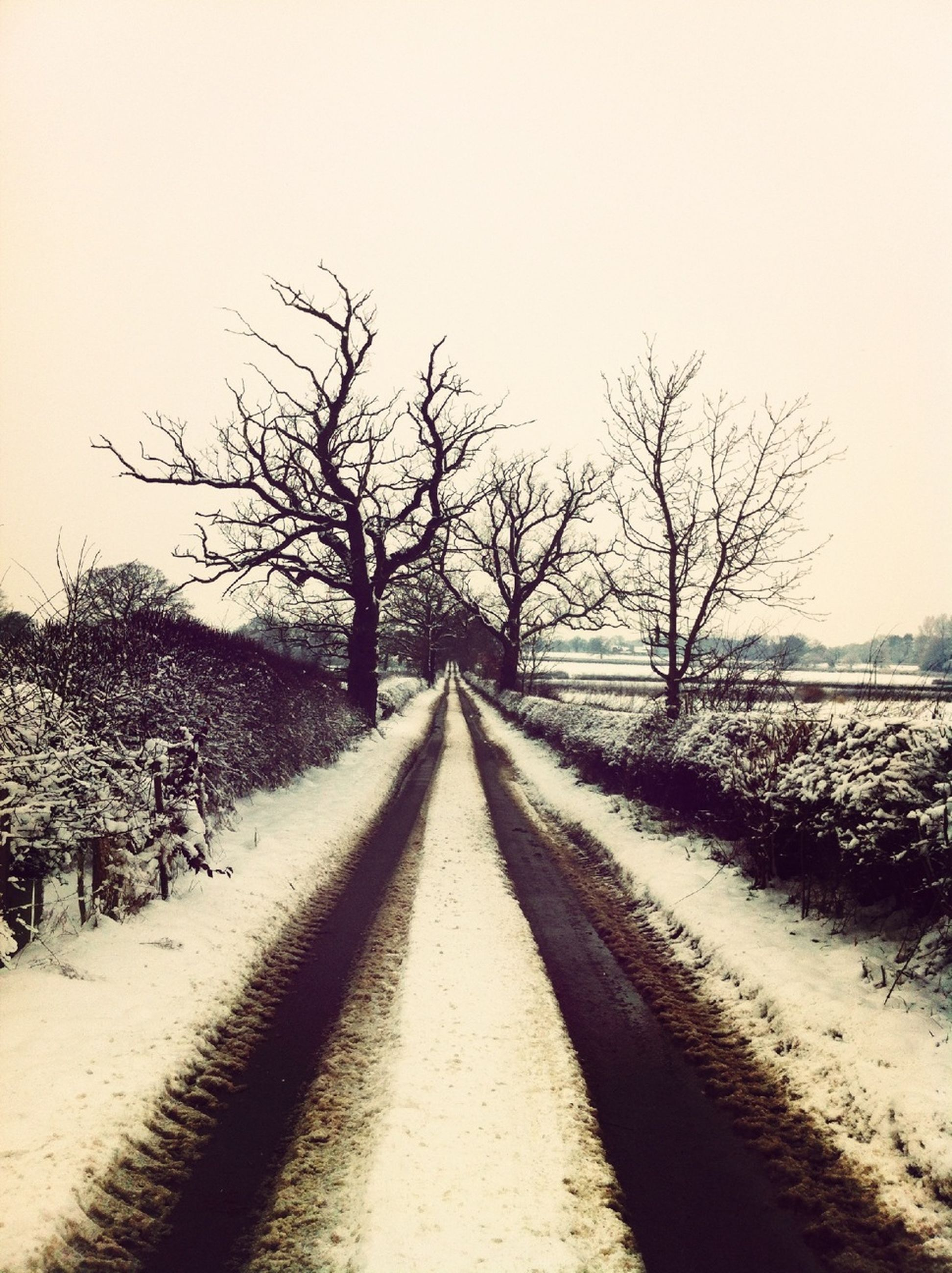 snow, winter, cold temperature, the way forward, bare tree, diminishing perspective, season, vanishing point, weather, road, tree, clear sky, tranquility, covering, tranquil scene, transportation, landscape, nature, field, long