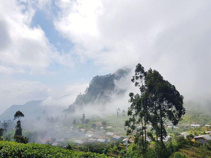 """A breath of fresh air."" Mountain Mountain View Tea Crop Tea Field Air Tree Outdoors Nature Fog Cloud - Sky Mountain No People"