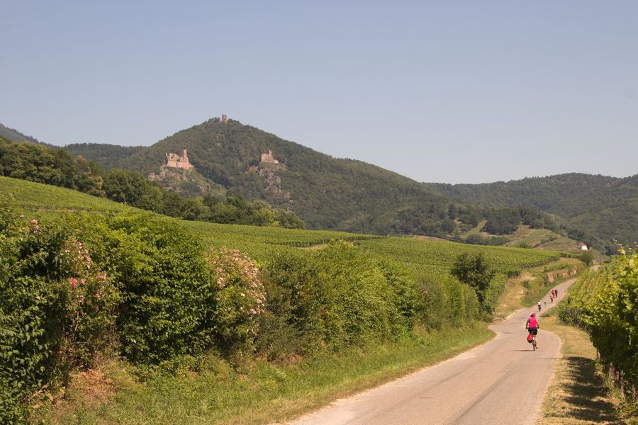 Cycling trip through the Alsace Alsace Alsace France Beauty In Nature Clear Sky Cycling Cyclist Day Elsass Full Length Landscape Landscape_photography Mountain Mountain Range Nature Outdoors People Plant Real People Road Scenics Sky Transportation Tree