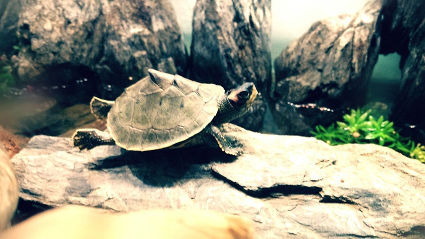 Vijendrapaliwla Vijendra Myclick💚 MyPhotography Love Animal Petlover Saveturtles Savetheplanet Turtles Relaxing