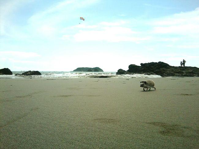 Day Beach Sand People Shore Island Hedgehog Parachute Costa Rica