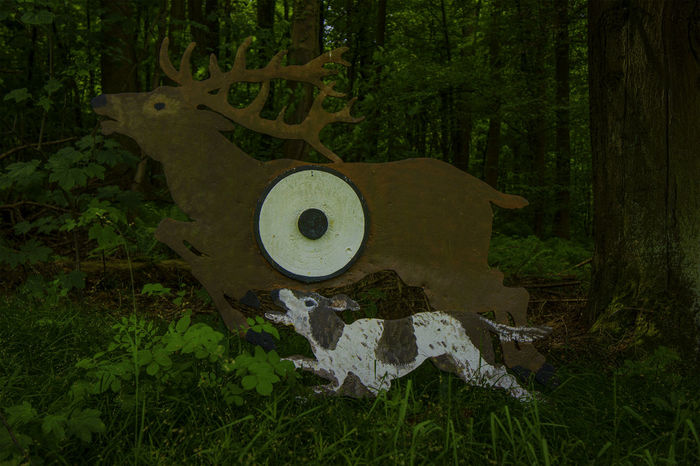 Ziel Dogslife Green Color Hirschgeweih Jagd Jagdhund Landscape Nature Wildlife & Nature