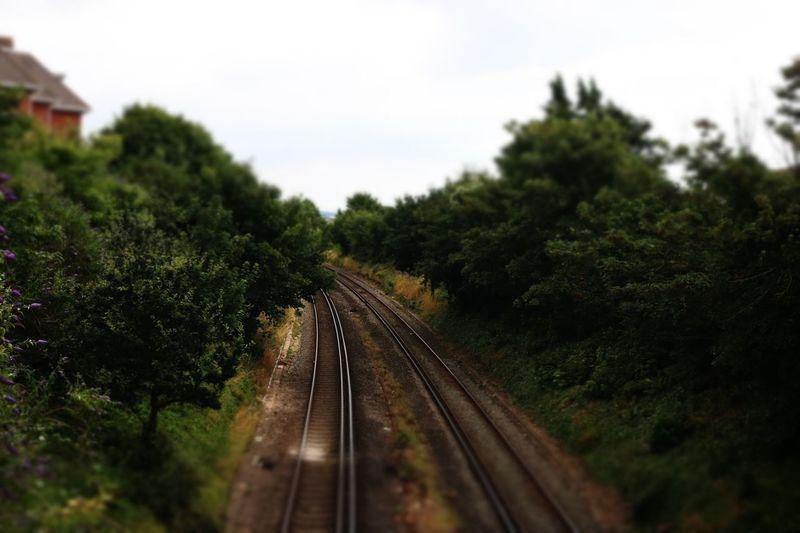 Day Growth Nature No People Outdoors Rail Transportation Railroad Track Railway Track Sky The Way Forward Transportation Tree
