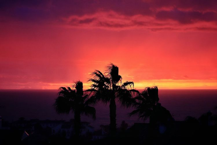 8.10am, a fire in the sky Morning Sky Silouette & Sky Palm Tree Silhouette Silhouette Red Sky Sunrise Red Sky Sunrise And Clouds Sunrise Silhouette Sunrise Silhouette Sunrise_Collection Sunrise Sunrise Sea Beauty In Nature Palm Tree Scenics Tree Nature Horizon Over Water Sky Tranquil Scene Cloud - Sky Travel Destinations No People Beach Silhouette Tranquility Outdoors Water