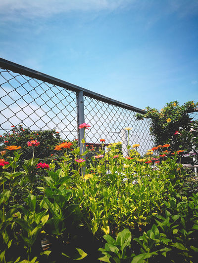 Plants by fence against sky
