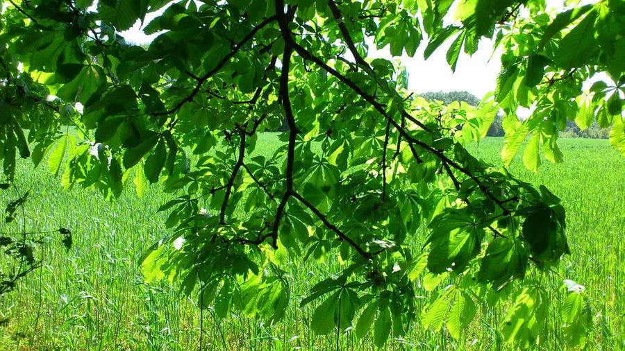 Green leaves on grass