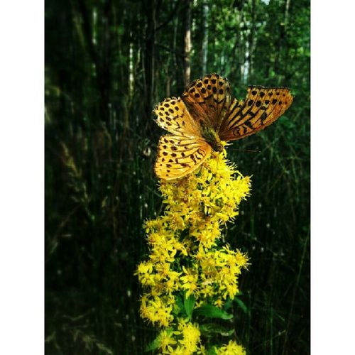 Fly when a broken wing. Butterfly Wing Flowerstarz Flower_passion flowerlower flower_stalking unopix naturelovers mobile_nature ig_captures_nature russiamylove naturehippys nature_perfection ic_nature rsa_nature rsa_ladies blossom insta_pic_blossom yellow_up flight natureonly gf_russia gang_family macrotextures russiamylove Siberia