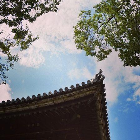 三十三间堂 蓝天 绿树 晴 instagood instagram followme 屋檐 roof sky cloud leaf
