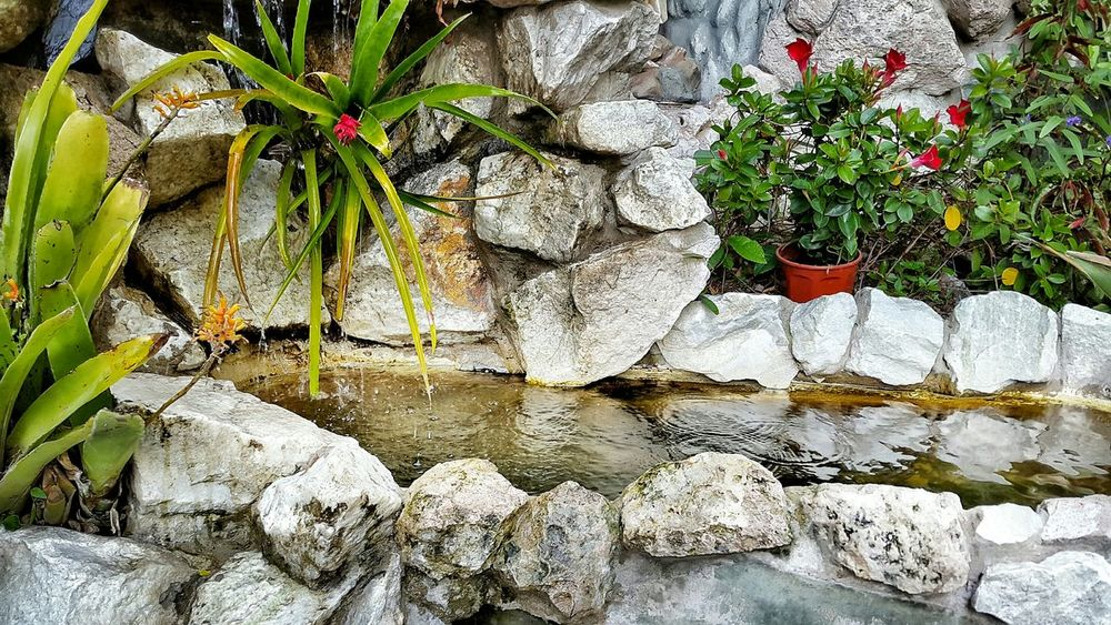 Flowers,Plants & Garden Spring Flowers EyeEm Best Shots - Flowers Flowers, Nature And Beauty 🌷 Flowers 🌹 Fuente❤Agua Fuente Agua Water_collection Water Reflections