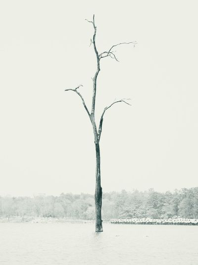 Blackandwhite Nature Solitude Lake View Lake Tree Sky Single Tree Dead Plant Dead Tree Calm Surreal Countryside Tranquil Scene Scenics Idyllic Tranquility Non-urban Scene Horizon Over Water Remote Lakeside Beauty In Nature Coast Shore Woods Dried Plant Mysterious Lone Isolated Blooming