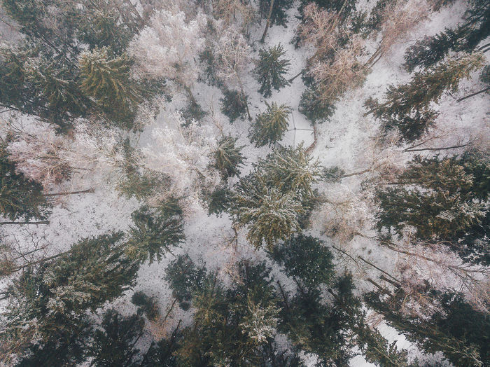 Fog over the forest Drone  Winter Aerial View Beauty In Nature Cold Temperature Day Fog Fog Over The Forest Forest Full Frame Green Color Growth Landscape Nature No People Outdoors Pine Tree Plant Scenics Sky Tranquil Scene Tranquility Tree