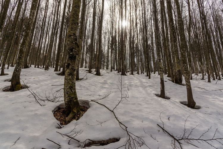 Erve Erve Miozzo Photo Miozzo Outdoors Snowcapped Mountain WoodLand Scenics - Nature Field No People Trunk Tree Trunk Tranquil Scene Tranquility Beauty In Nature Tree Land Plant Snow Cold Temperature Non-urban Scene Winter Forest Nature Covering Coniferous Tree