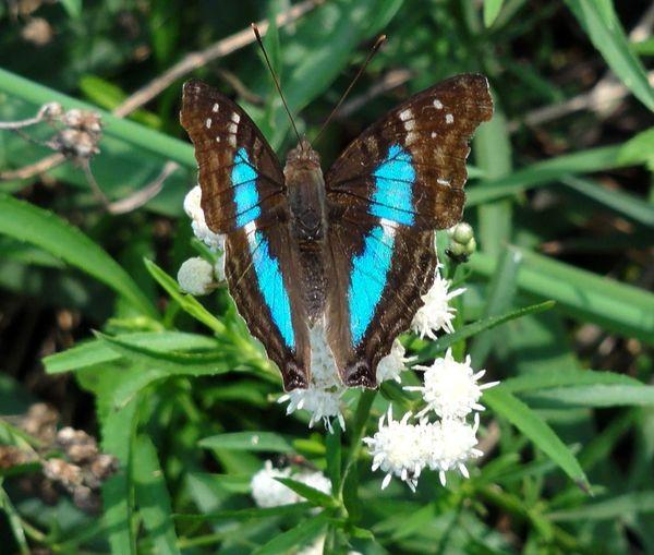 Secret Garden Butterfly Taking Photos