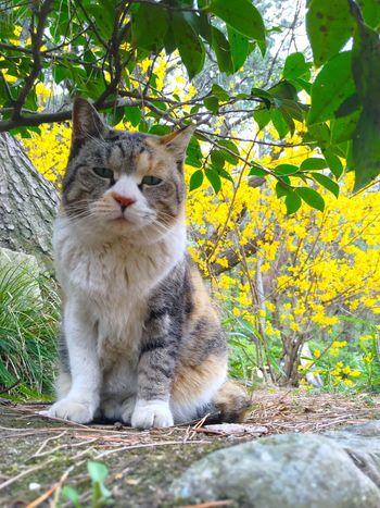 猫、ネコ、ねこ。春が来た。 Sankei-en Sankeien Kanagawa EyeEm Nature Lover Landscape Spring Spring Has Arrived Spring Is Coming  Green Green Color Relaxing Relaxing Moments Cat Showcase April Japanese Culture Japanese Style Japanese Garden