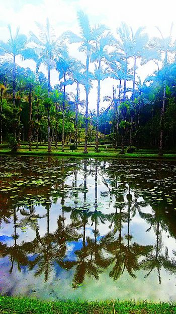 Green Color Naturephotography CarpeDiem  Beauty In Nature Water Reflection Tree Tranquil Scene Green Color Tranquility Pond Growth Scenics Lake Nature Non-urban Scene Beauty In Nature Plant Calm Standing Water Branch Day Swamp Leaves