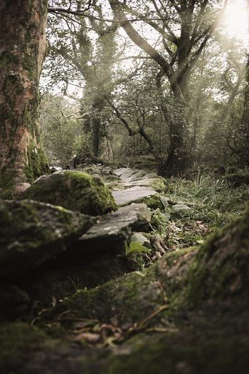 Surface level of moss on rocks in forest