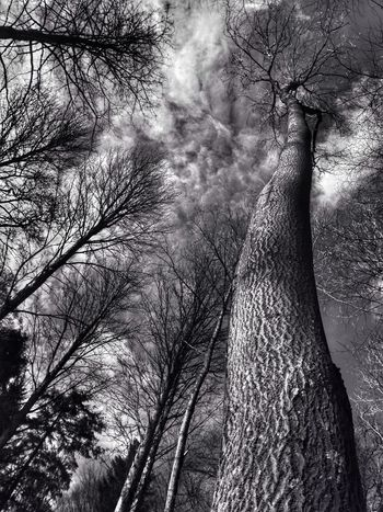 Black And White Lightandshadow Blackandwhite Monochrome Clouds And Sky Woodland Walk Trees