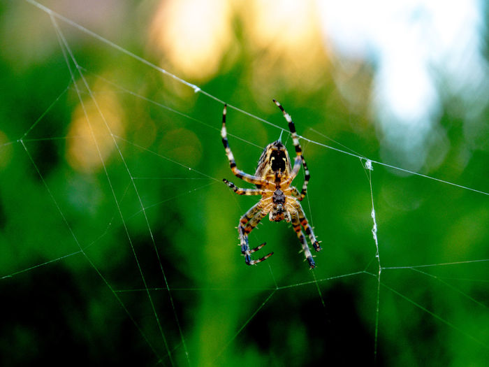 Animal Animal Leg Animal Themes Animal Wildlife Animals In The Wild Arachnid Arthropod Close-up Complexity Day Focus On Foreground Fragility Insect Invertebrate Nature No People One Animal Outdoors Spider Spider Web Vulnerability  Web Zoology