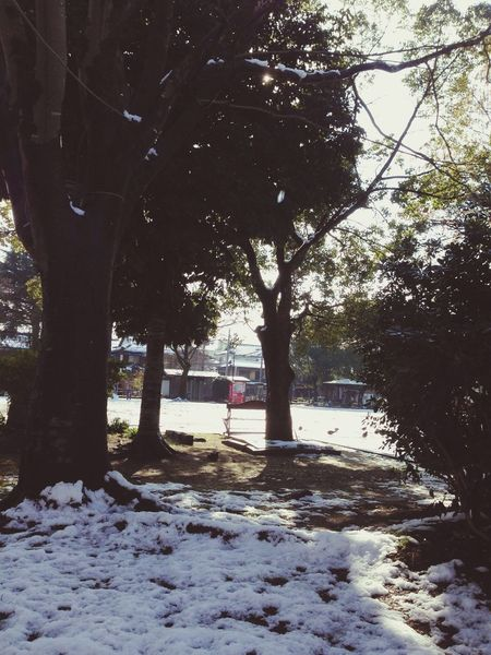 Take A Walk Park A Walk In The Park 雪解けの陽だまり