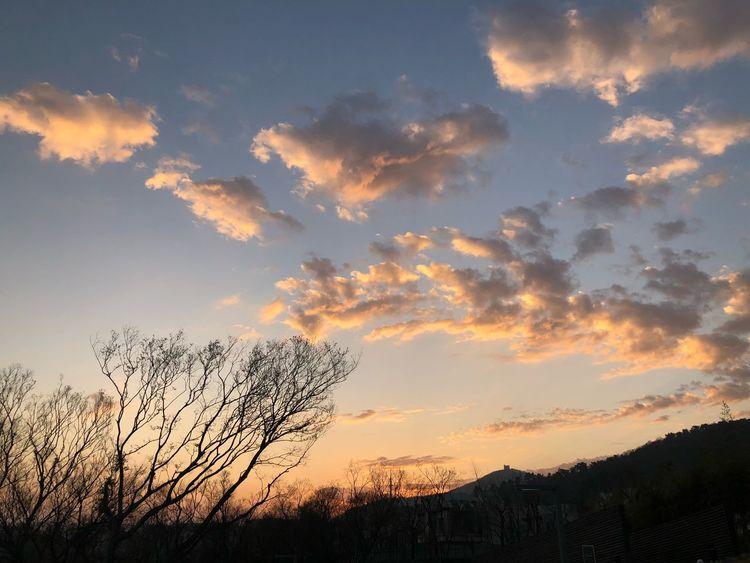 Sunset Beauty In Nature Scenics Nature Tree Tranquil Scene Sky