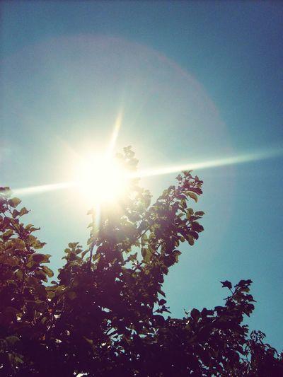 Sunshine Trees Tree Sunset