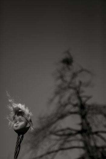Doll Head Tree Close-up No People Outdoors Plant Sky Terror Terror Scene