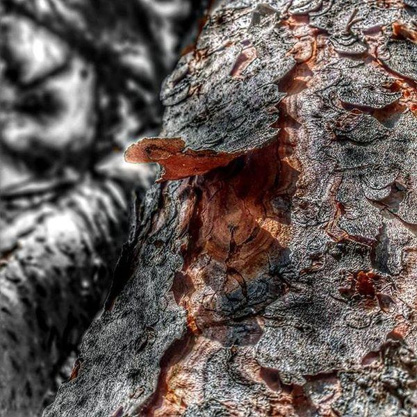 Nature Natureza Naturelovers Tree Colors Colorful Monochrome Monochromatic Monocromatico Blackandwhite Pretoebranco Textures Texturas Cores Spring Igersportugal Picoftheday Photooftheday Instagram EyeEm Eyeemoninstagram