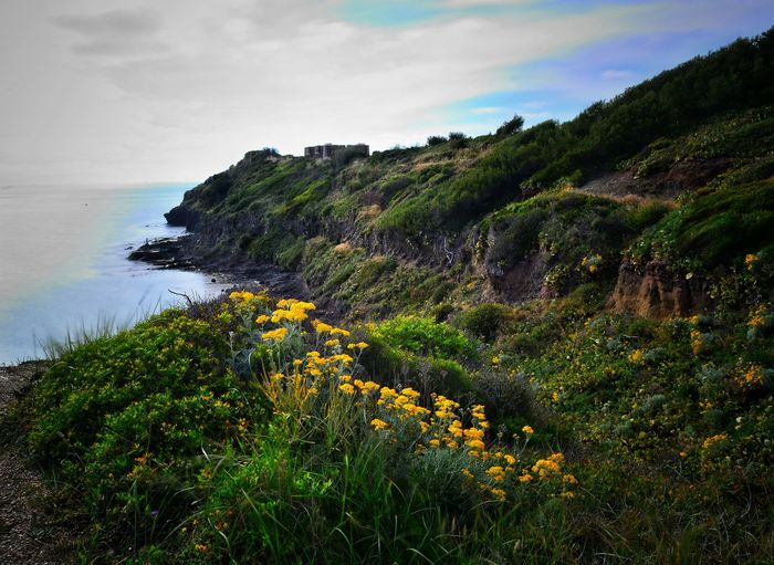France🇫🇷 Landscape_Collection Water Sea Flower Landscape Coastline Coast Seashore Rocky Coastline