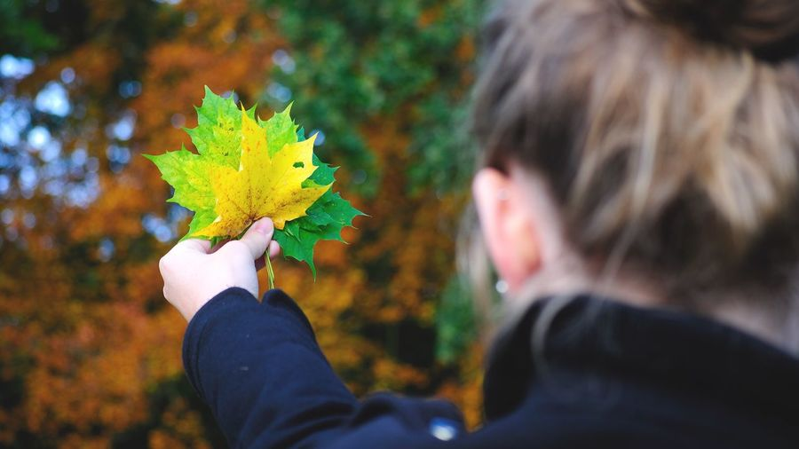 Rear view of woman holding maple leaves against autumn trees