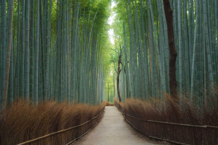 View of bamboo trees in park