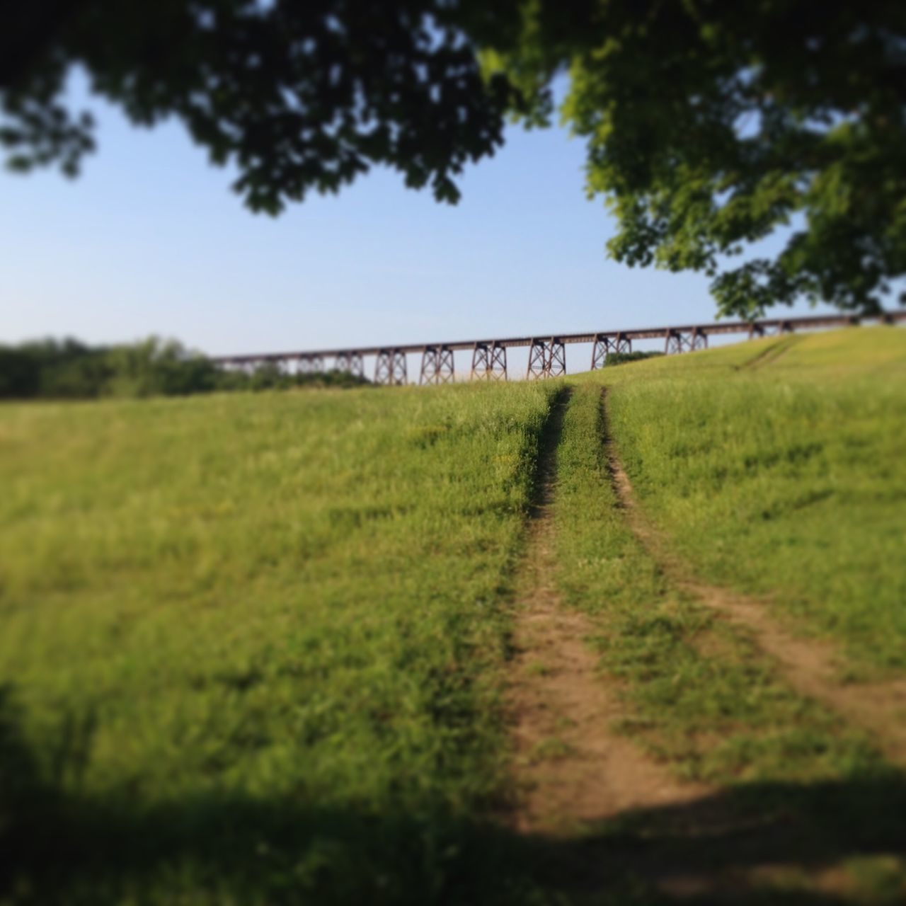 bridge - man made structure, connection, field, transportation, day, green color, tree, nature, outdoors, grass, growth, the way forward, no people, landscape, road, sky, clear sky, architecture