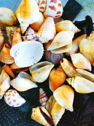 Coquillage. Directly Above Food And Drink