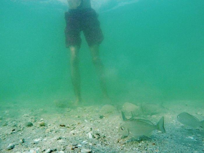 Diving Sea Life Beauty In Nature Fish Sea Swimming Nature Sea Seaweeds Underwater