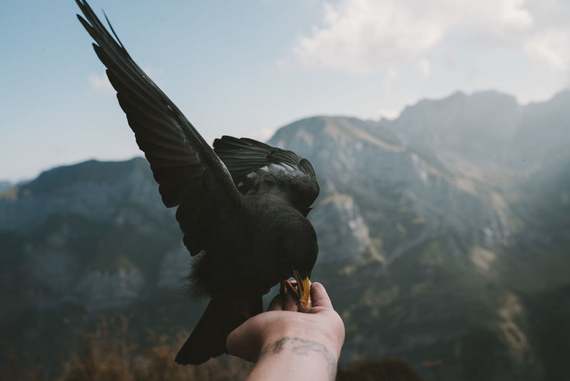 Animal Wing Animals In The Wild Beauty In Nature Bird Close-up Cloud - Sky Feeding  Focus On Foreground Holding Mountain Nature One Animal Outdoors Part Of Person Personal Perspective Sky Spread Wings Tranquility Wildlife Zoology