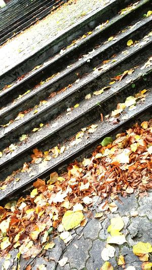 High Angle View Day Outdoors Leaf Autumn Street No People Full Frame Backgrounds Nature Close-up Stairs Leaves On Stairs Autumn Autumn Colors
