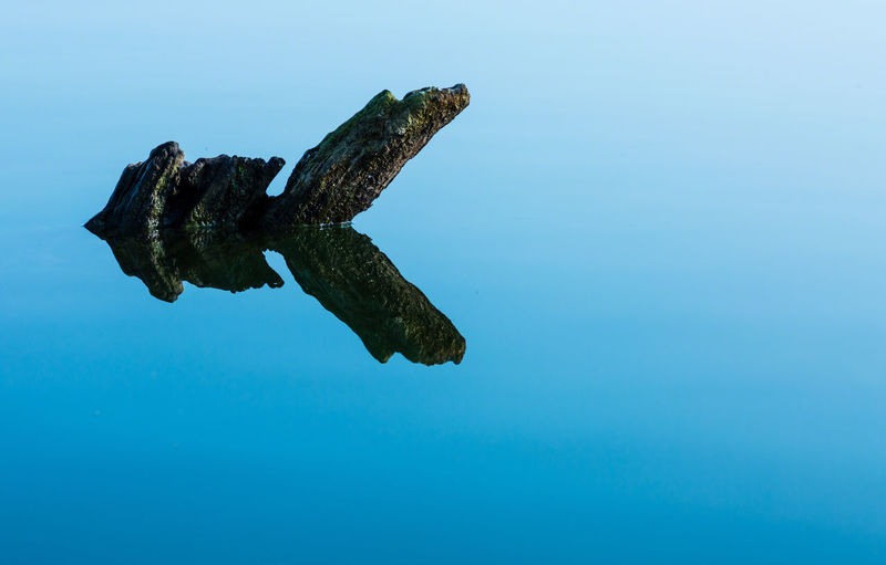 View of turtle swimming in sea against sky