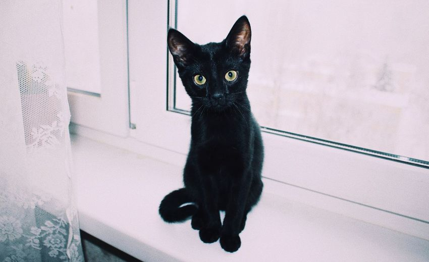 Portrait of black cat sitting on floor at home