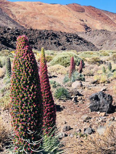 Plants growing in desert