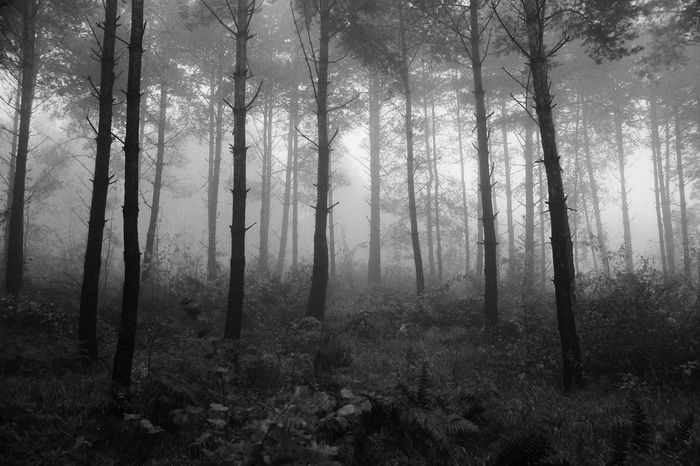 Adventure Adventure Club Beauty In Nature Blackandwhite Bosnia Contrast Creepy Dark Fog Forest Hiking Hikingadventures Landscape Misty Mountains  Mountain Nature Nature No People Outdoors Shadows Sony SLT-A58 Tranquil Scene Tranquility Travel Tree