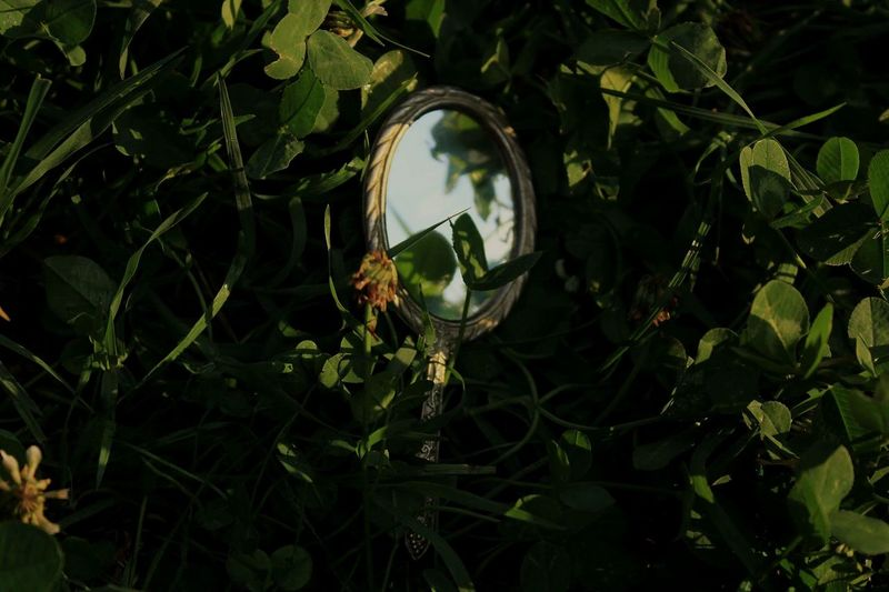 Grass Mirror Mirror In Nature Sky Blue Sky Clovers  Green Leaf