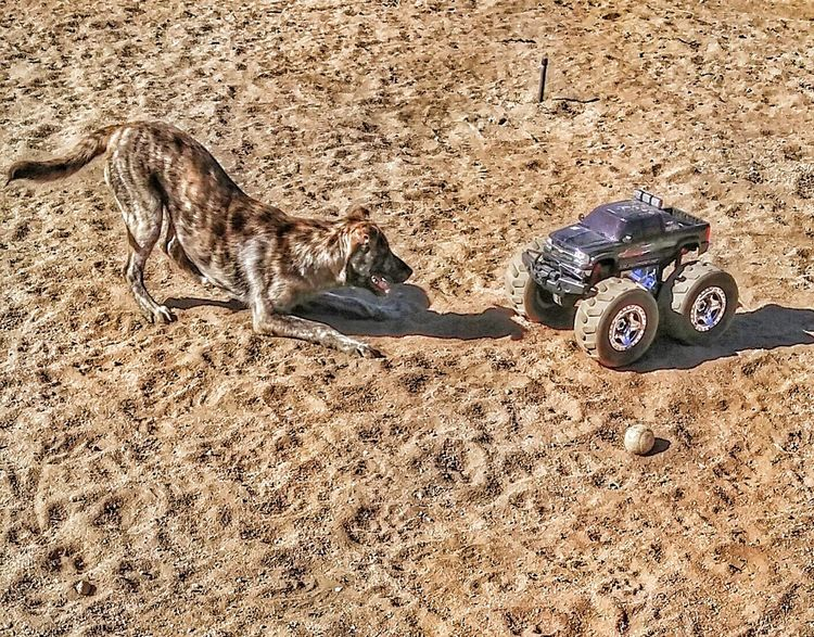 Playtime! Remote Control Car Backyard Adventure Mans Best Friend Love My Dog❤️ Southern California ...penny vs truck...truck wins..lol