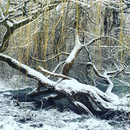 Snow covered bare trees