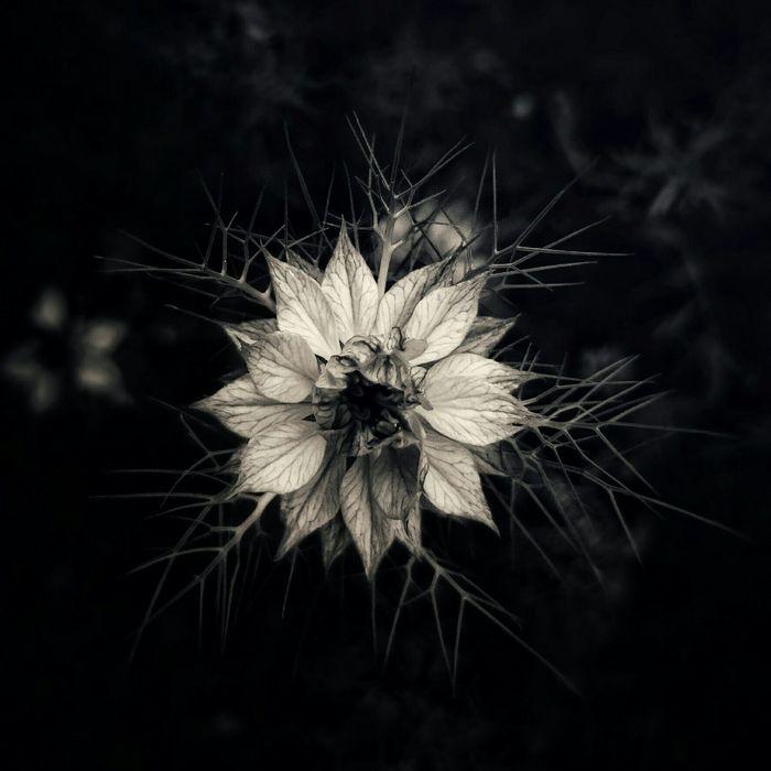 Taking Photos Flower Blackandwhite Nature Photography Naturelovers
