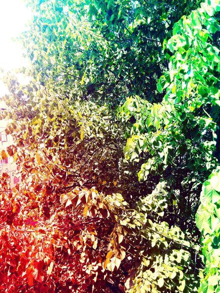 See the beauty. Accept the beauty. I Like Trees First Eyeem Photo