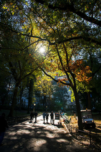 Fall in New York's Central Park Autumn In New York Autumn In New York City Central Park Autumn Beauty In Nature Branch Central Park NYC Day Growth Men Nature Outdoors People Real People Shadow Sky Sunlight Tree Women